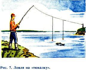 Хитрая рыба Красноперка